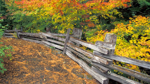 Split-Rail, Mount Rainier National Park, Washington.jpg