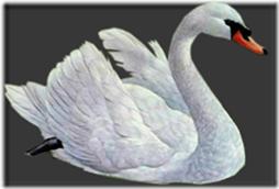 cisnes-buscoimagenes-6_thumb