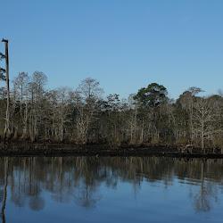 Fowl Marsh from Boat Feb3 2013 058