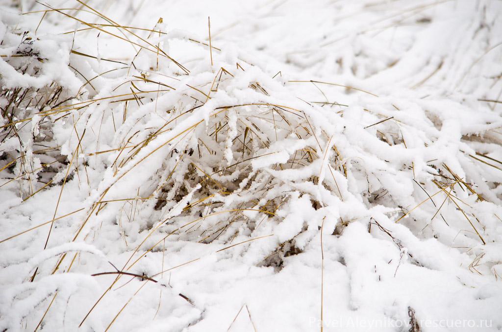 Трава в снегу, Nikkor 55-300