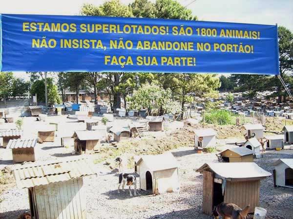 Soama, a aldeia dos animais abandonados