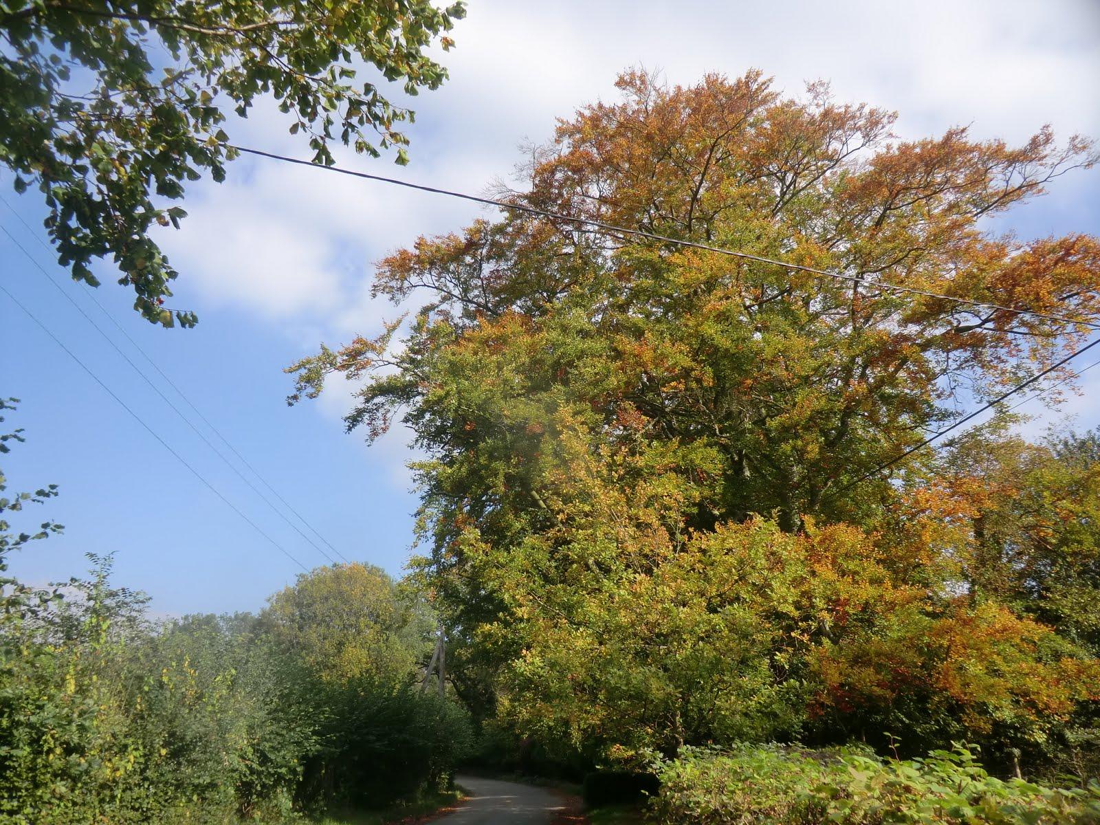 CIMG0796 Marsh Green Lane