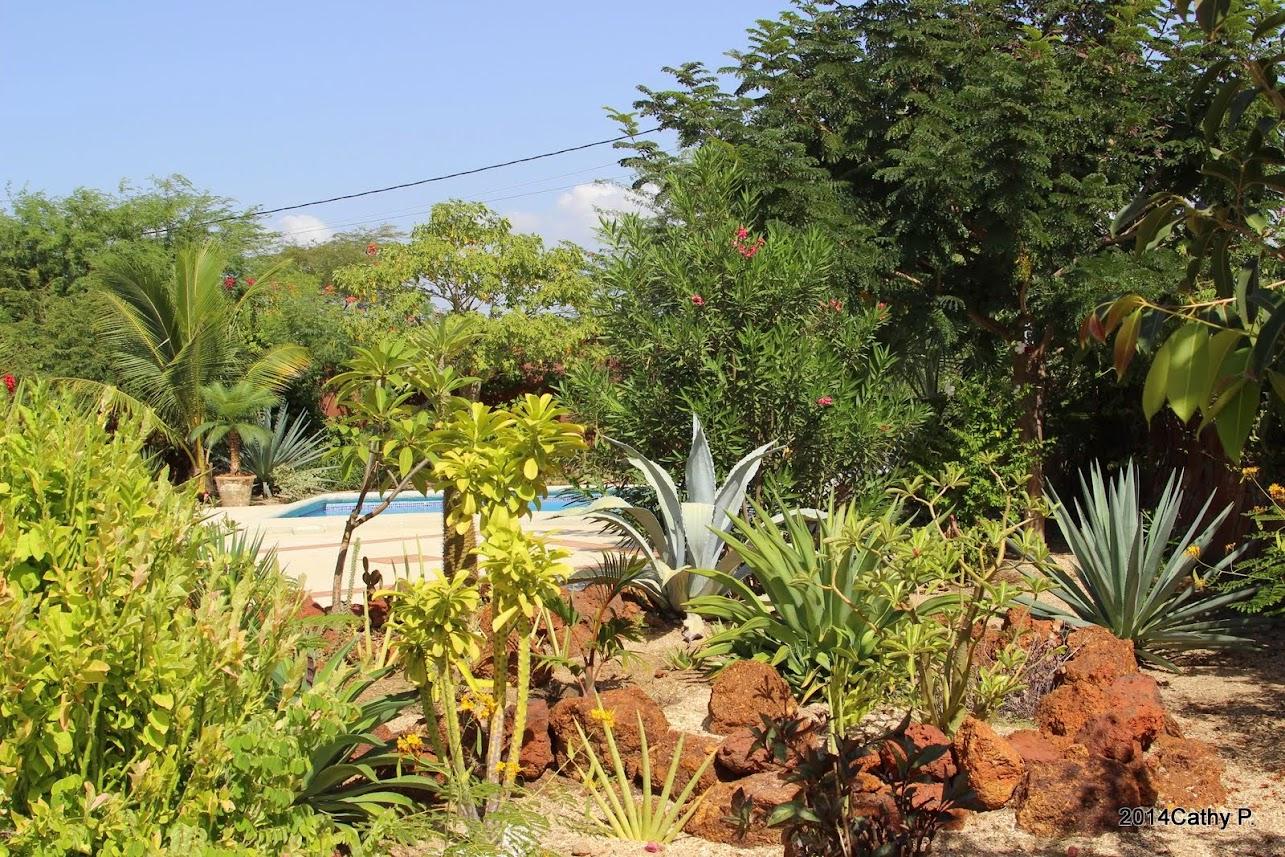 Mon jardin senegalais IMG_1670
