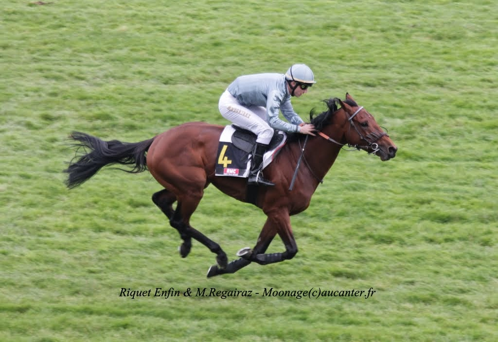 Photos Auteuil 2-11-2014 (48h de l'obstacle) IMG_5383
