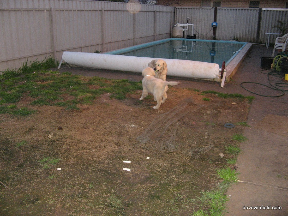 0830Jake in the Back Yard.jpg