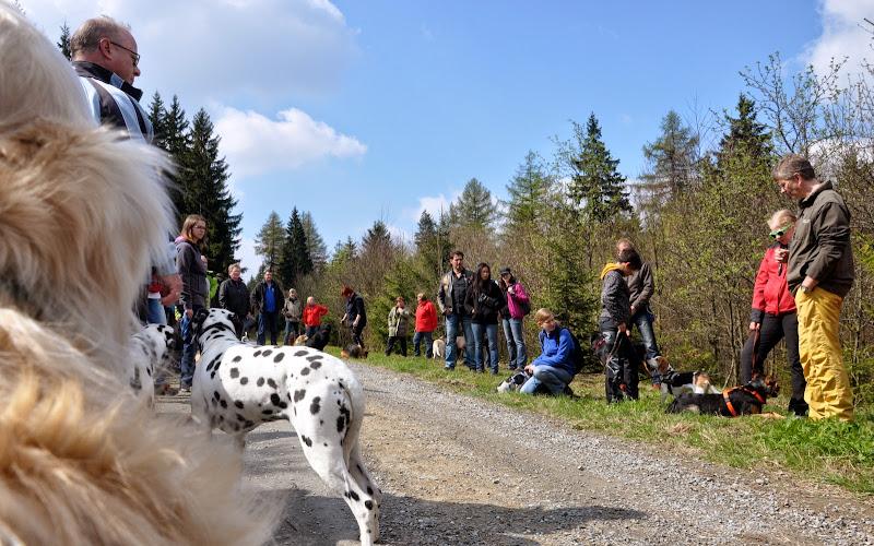 2014-04-13 - Waldführung am kleinen Waldstein (von Uwe Look) - DSC_0469.JPG