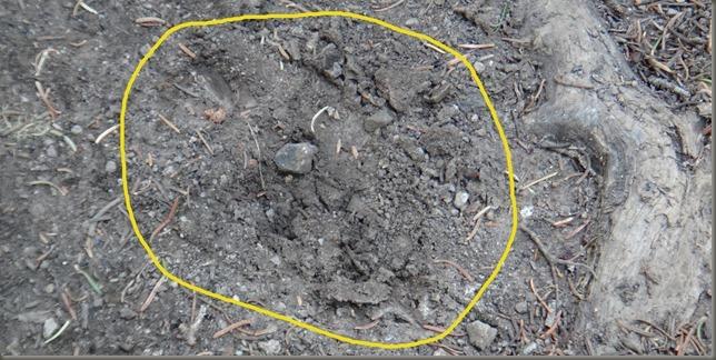 bear claws DSC06238_thumb[8]