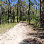 Walking along the white sand of the Warriwarri Lookout trail (236087)