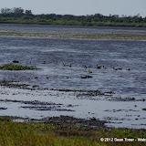 04-06-12 Myaka River State Park - IMGP4456.JPG