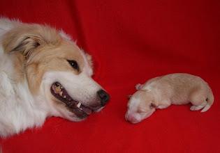Photo: Lissa   met mama Indy 15.09.2012 1 dag oud 338 gram