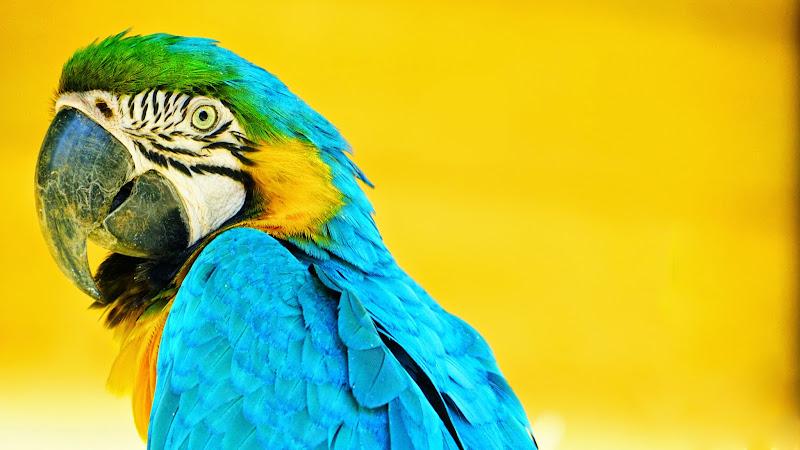 多摩動物公園 インコ 写真