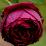 zakia fathima's profile photo