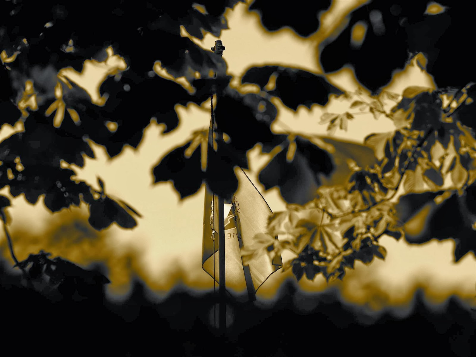Področni mnogoboj, Sežana 2007 - P0207157.JPG