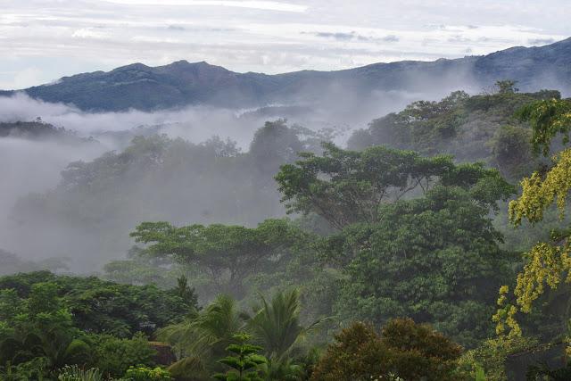 Santa Fe, 650 m (Veraguas, Panamá), 19 octobre 2014. Photo : J.-M. Gayman