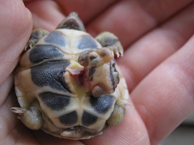 Non sono un gatto ma sono una tartaruga pagina 4 for Laghetto per tartarughe di terra