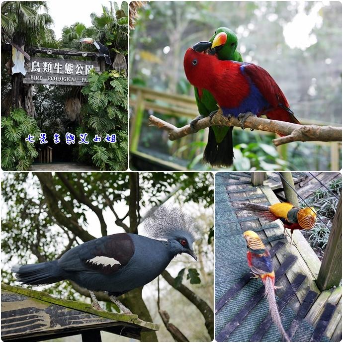 27 鳥類生態公園