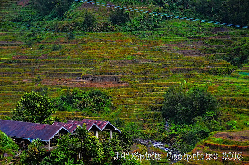 The View of Rice Terraces from Banaue Homestay