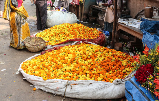 Start your day at the MallickGhat Flower Market