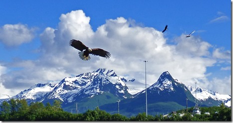 Valdez Eagles