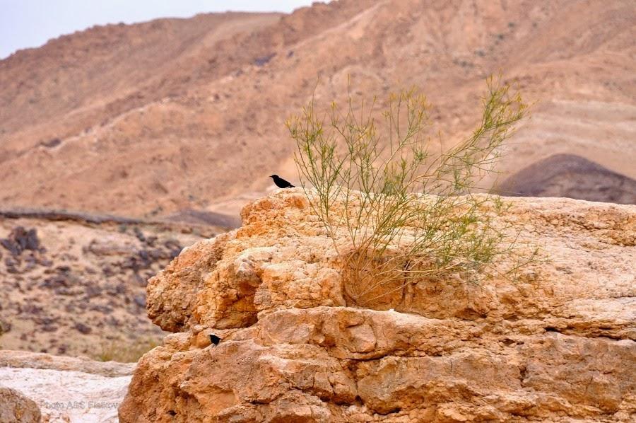 Всюду жизнь. Эйн Йоркам. Экскурсия гида Светланы Фиалковой в пустыню Негев.