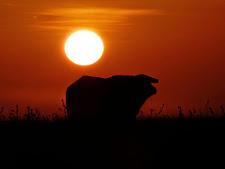 wildlife-sunset.jpg