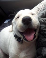 Cute-Dog-1 (4)