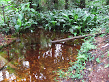 Fresh water spring in the jungle