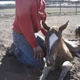 Horses - 1511263_586555834747344_1256008302_n.jpg