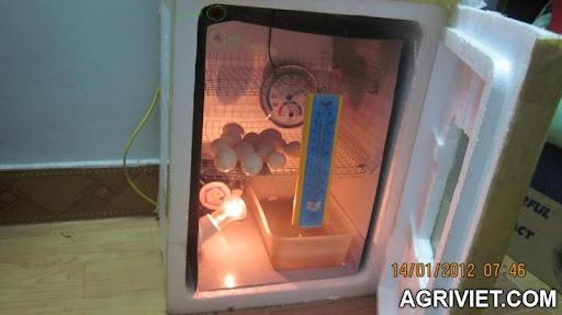 Agriviet.Com-CopyofIMG_2108-1.jpg