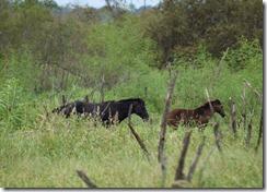 Wild Horses-3