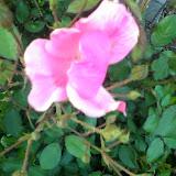 Gardening 2014 - 0411192037.jpg