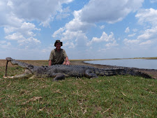 Mr Retschlag from Australia with a massive crocodile that had eluded us for years, 4.7m. This cattle killer weighed  600kg+. In its stomach we found some large cattle leg bones, several undigested cattle ear tags and 1 small child...... just joking!!