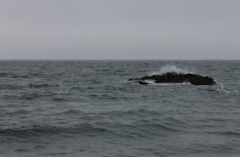 Photo: Найдите тюленя .