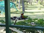 Papageien auf der Veranda