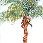 170 Palm Study #1.jpg