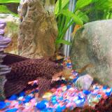 Fish - 116_0196.JPG
