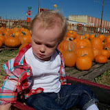 Pumpkin Patch - 115_8262.JPG