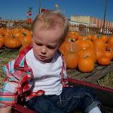 Pumpkin Patch - 115_8262.JPG