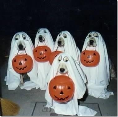 disfraces divertidos para perros  (37)