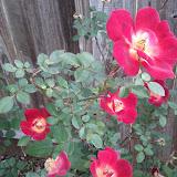 Gardening 2013 - IMG_20130330_094629.jpg