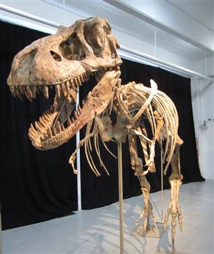 Protesters interrupt Tyrannosaurus fossil auction