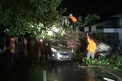 Sebuah Minibus Ringsek, Usai Tertimpa Pohon Tumbang di Jombang
