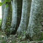 presentazione foreste casentinesi e carta (3).jpg