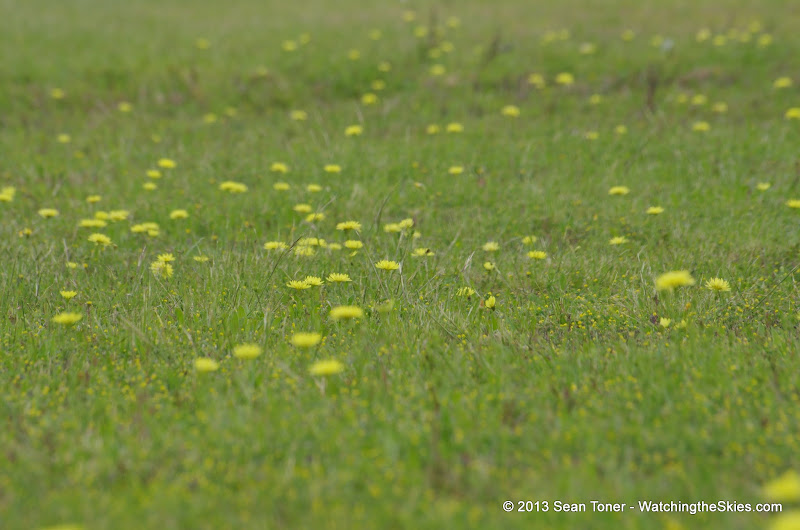2013 Spring Flora & Fauna - IMGP6369.JPG