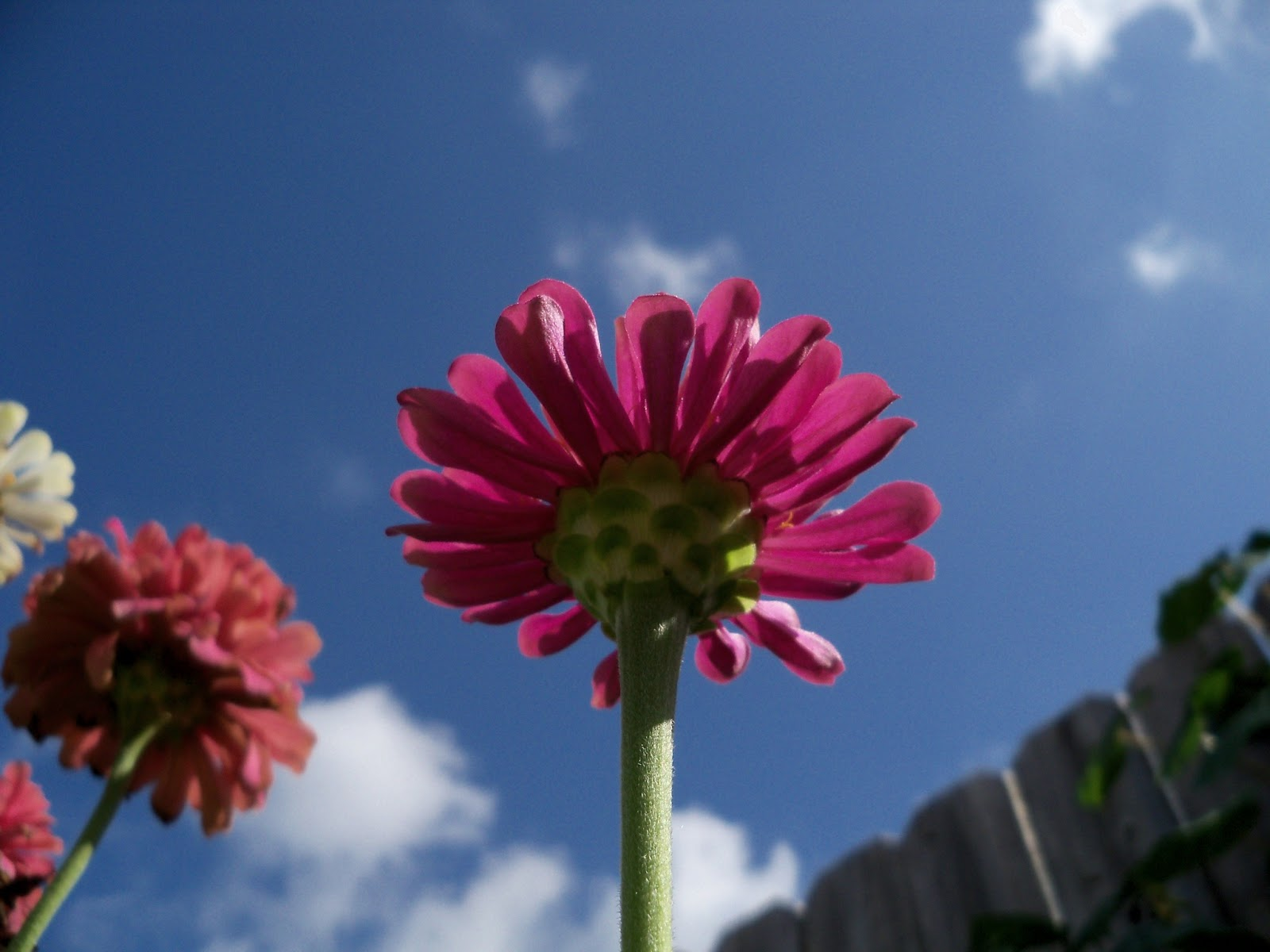 Gardening 2011 - 100_9973.JPG