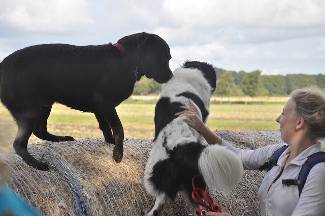 Survival voor Baas en Hond 2012 - DSC_0143.JPG