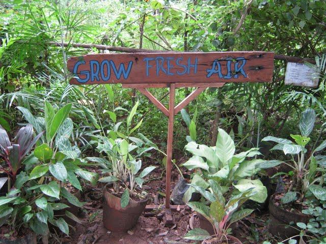 Grow Fresh Air Plants - IMG_0257.jpg