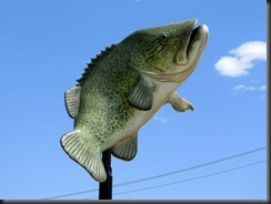 171105 002 Goondiwindi Big Cod