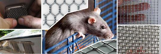 Dùng lưới inox chống chuột có hiệu quả không Image