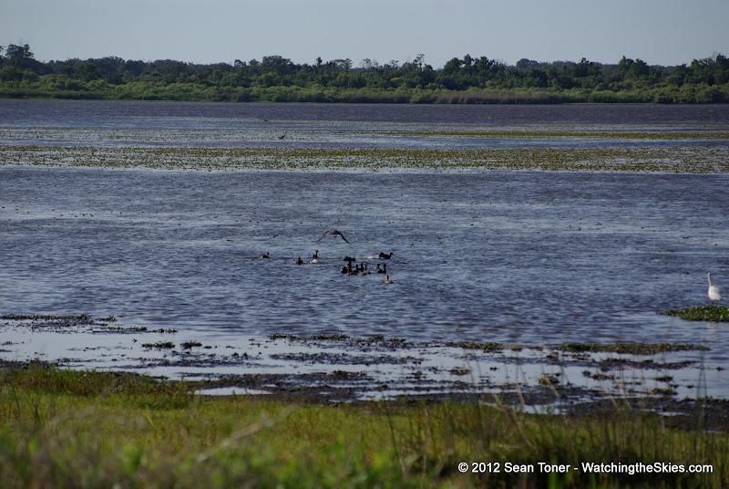 04-06-12 Myaka River State Park - IMGP4453.JPG